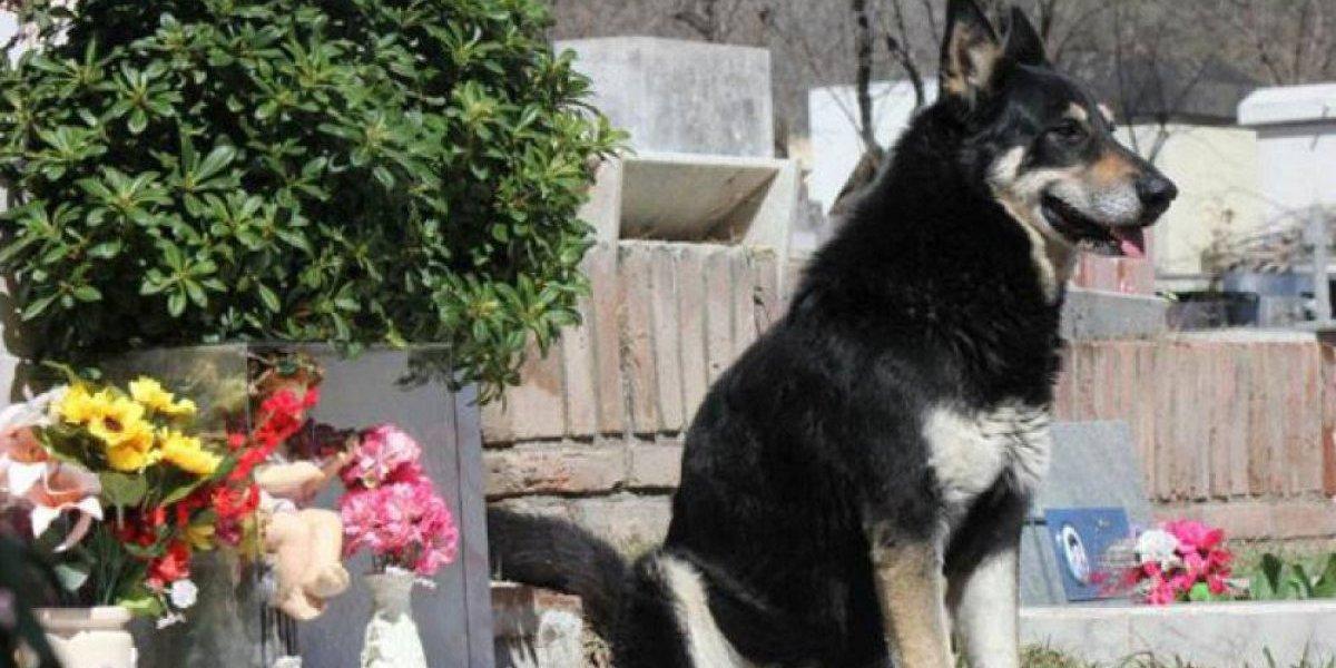 """Muere """"Capitán"""", el perro que cuidó la tumba de su amo durante 10 años"""