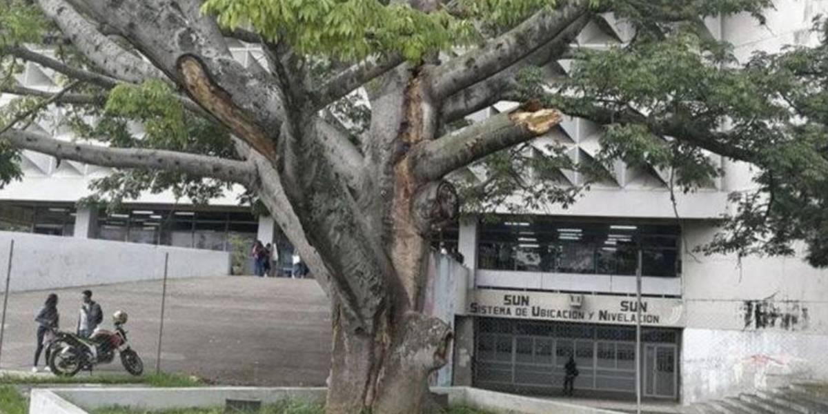 """Colectivo de Huelgueros aplicará multas por """"encuentros sexuales"""" en campus de la USAC"""