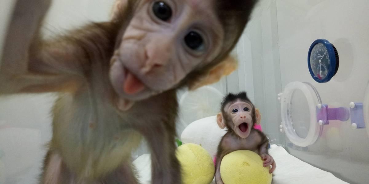 Macacos clonados na China são a coisa mais fofa que você vai ver hoje