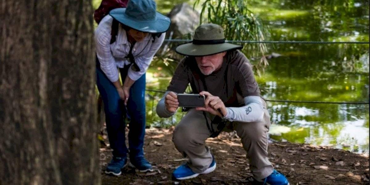 El silencio de la pandemia facilitó el avistamiento de más de 20 nuevas especies de aves y mariposas