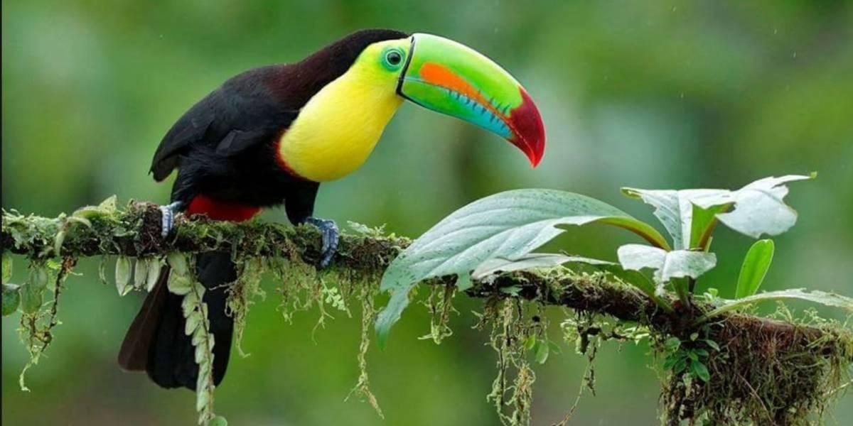 Escalofriantes imágenes: Boa se traga un tucán en Petén