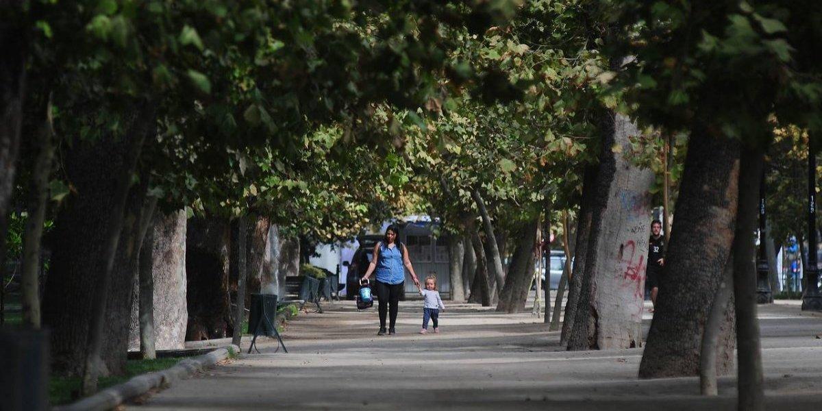 Santiago y sus plátanos orientales: ¿Por qué los municipios prefieren estos árboles a pesar de las reacciones de odio que generan?