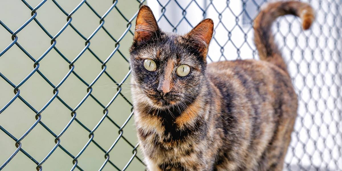 Feiras de adoção de animais acontecem neste fim de semana no ABC