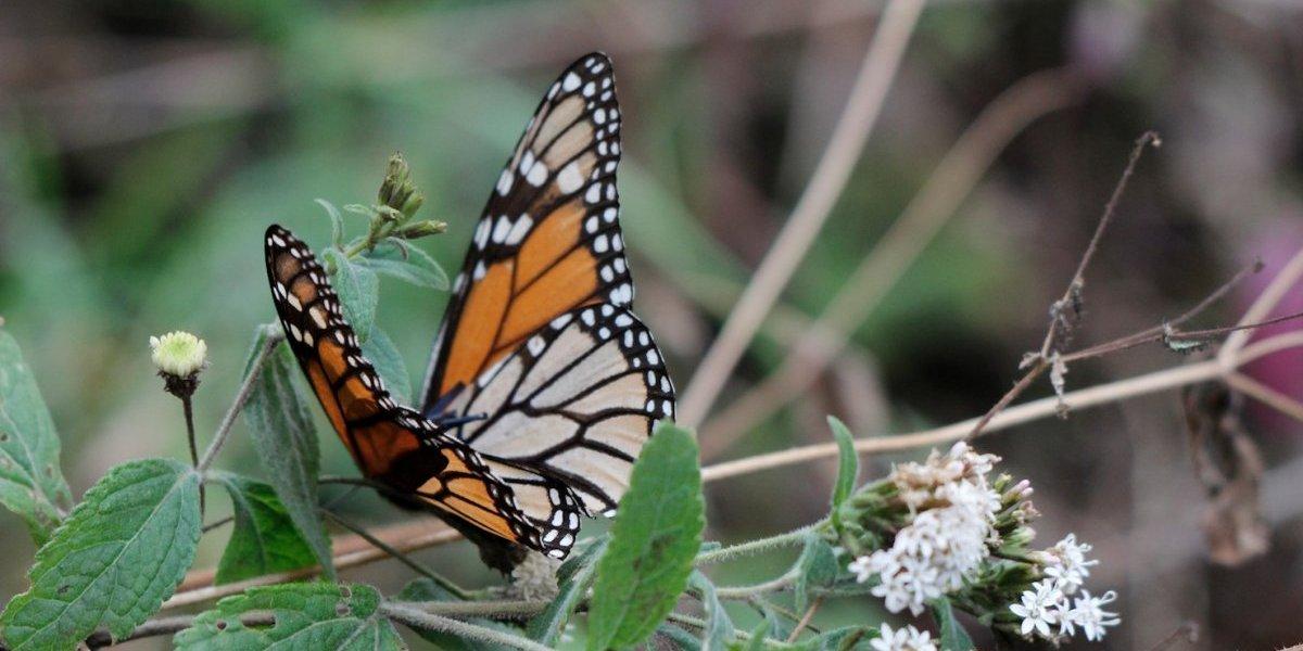 México: Visita el reino de las mariposas monarca
