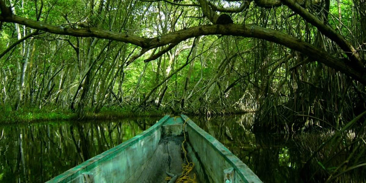Parque Natural Isla de Salamanca, un pulmón de manglares cerca de Barranquilla