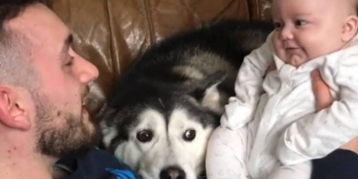 Perfil no Instagram faz sucesso ao mostrar amizade entre huskies e recém-nascido
