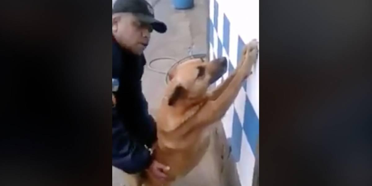 Como un criminal: captan a policía revisando a un perro como si fuera un delincuente