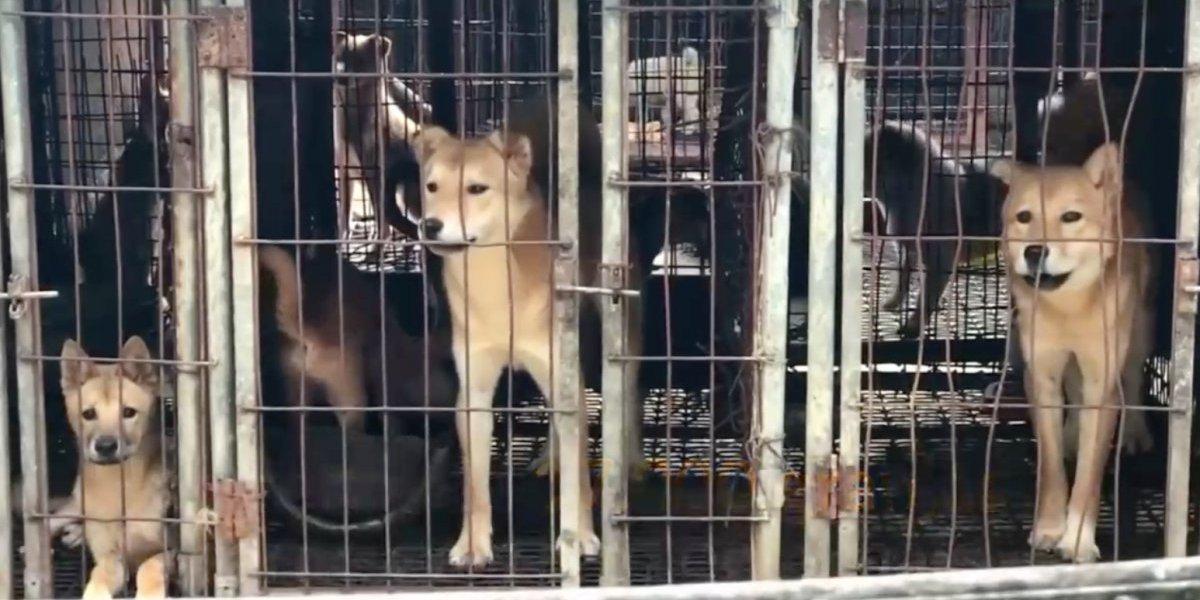 VIDEO: Causa polémica consumo de carne de perro en los Juegos Olímpicos de PyeongChang