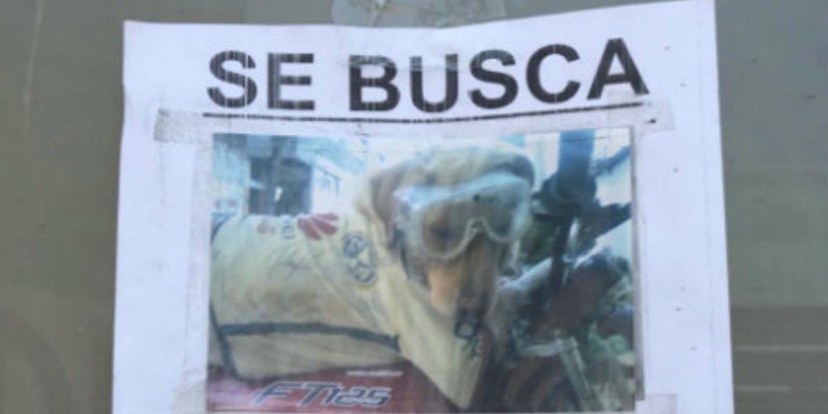 En Coapa buscan a una perrita de nombre América