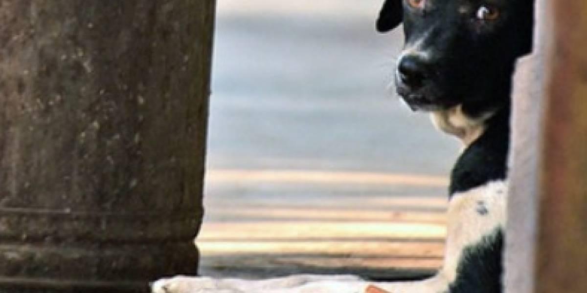 La desgarradora historia de una perrita y sus cachorros que esperan todas las noches en la estación de trenes a la mujer que las abandonó