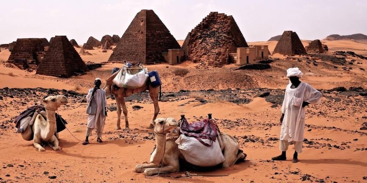 Matanza de camellos en Australia: tardaron 5 días en asesinar a 5 mil con ayuda de helicópteros