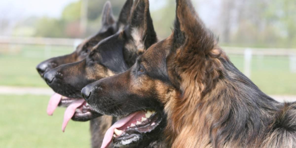 Mujer pretendía transportar droga en este inusual elemento, pero un perro la descubrió