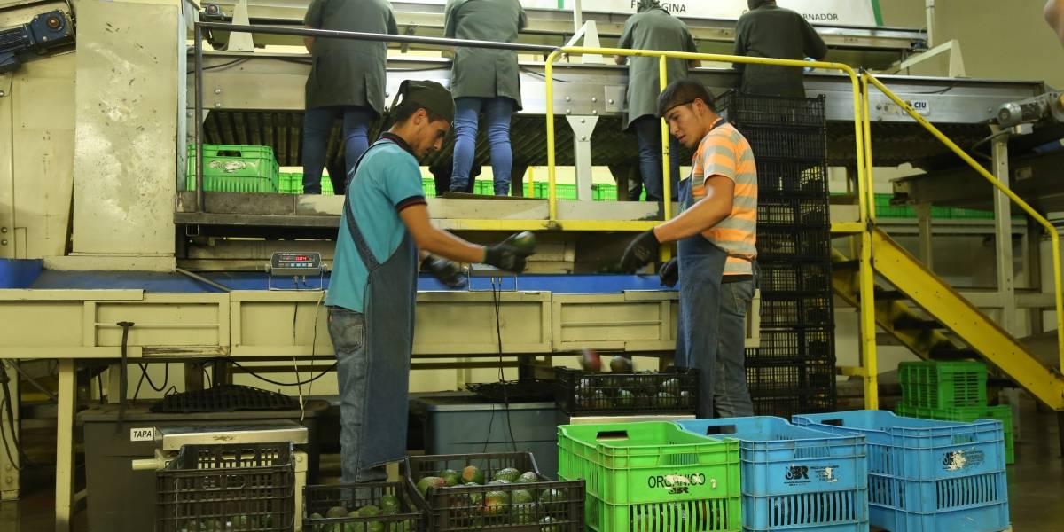 Exportaciones crecen 12.5% en enero