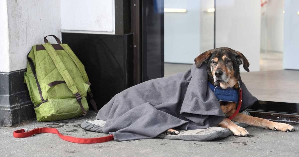Esse é o Knuff, cachorro de um morador de rua de Hamburgo, na Alemanha REUTERS/Fabian Bimmer