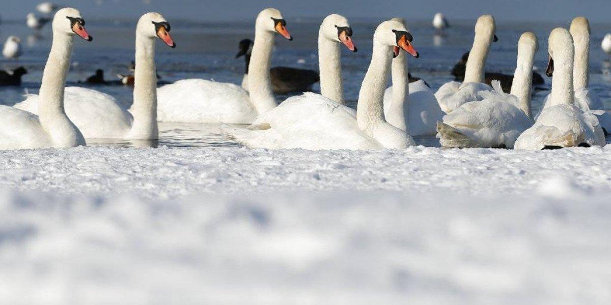 Fuertes nevadas causan trastornos en Europa
