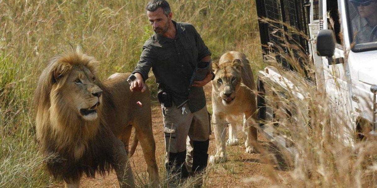 Leona mata a mujer en reserva sudafricana