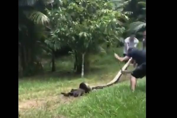 anaconda perro