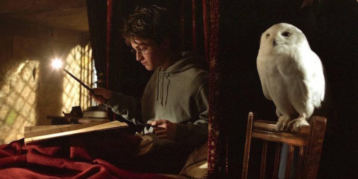 Luisa Mell acusa shopping de maltratar corujas em exposição do Harry Potter
