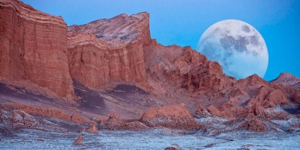 Microbios del desierto de Atacama entregan pistas sobre vida en Marte