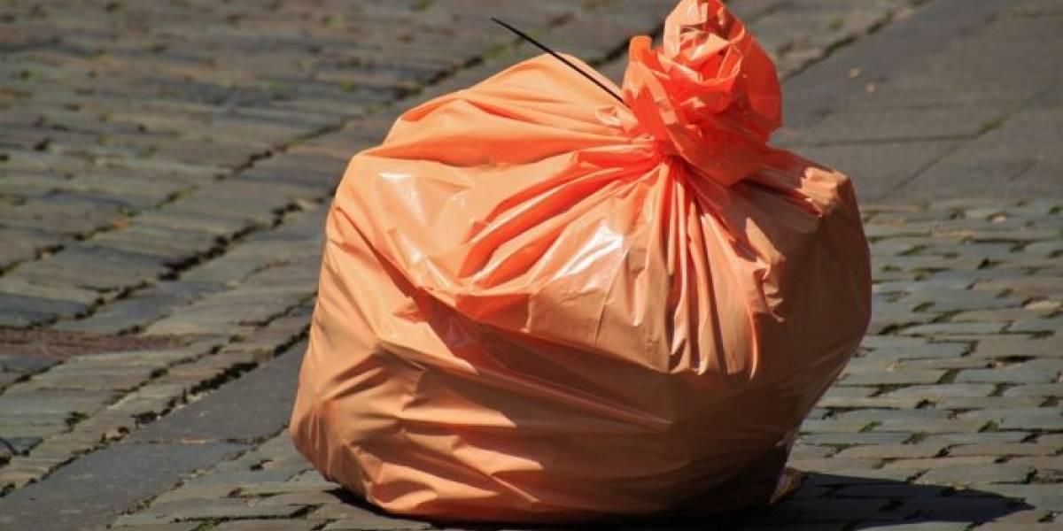 Mexicana crea un nuevo tipo de plástico a través del nopal
