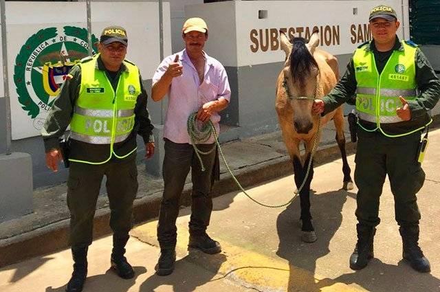 caballo rescatado