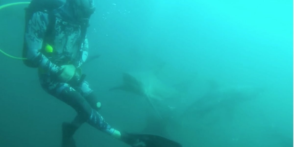 Video: Un tiburón ataca a un buceador