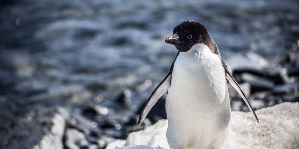 """Descubren """"súper colonia"""" de 1,5 millones de pingüinos en la Antártida"""