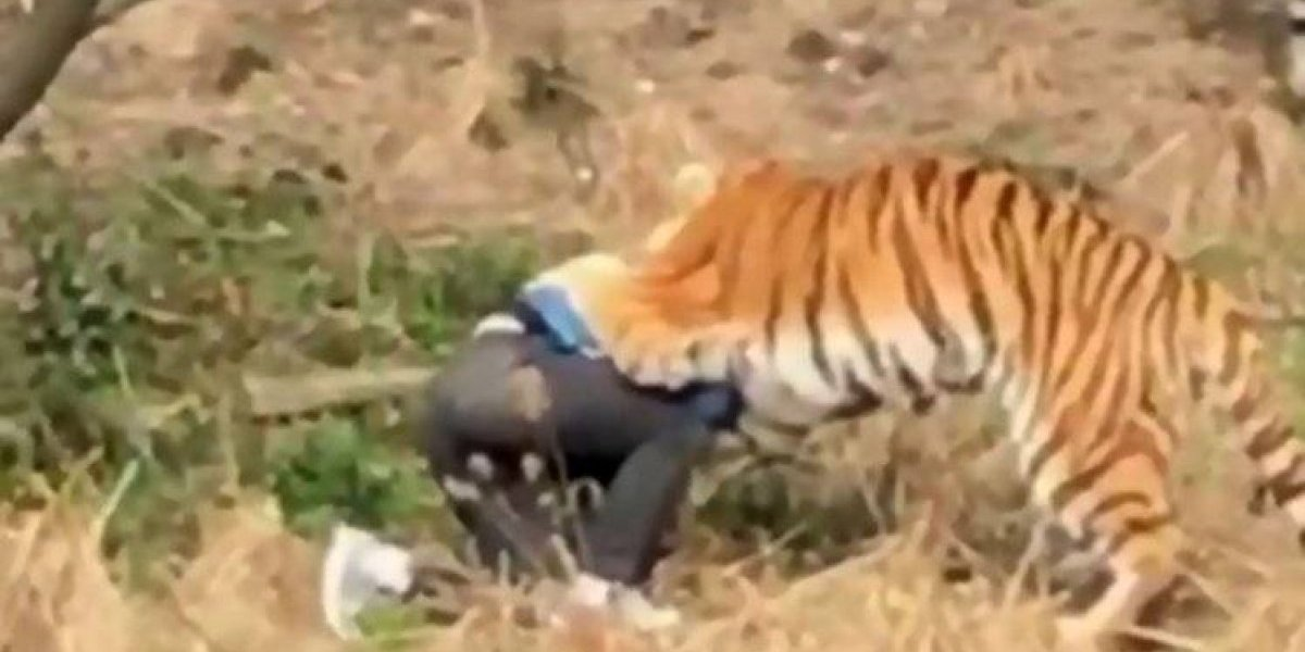 Turista que tentou burlar entrada em zoológico morre ao dar de cara com tigre