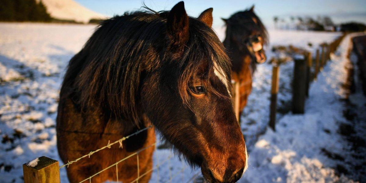 Lo cubrieron para que los niños no se aterraran: Encuentran caballo muerto y atado a un árbol
