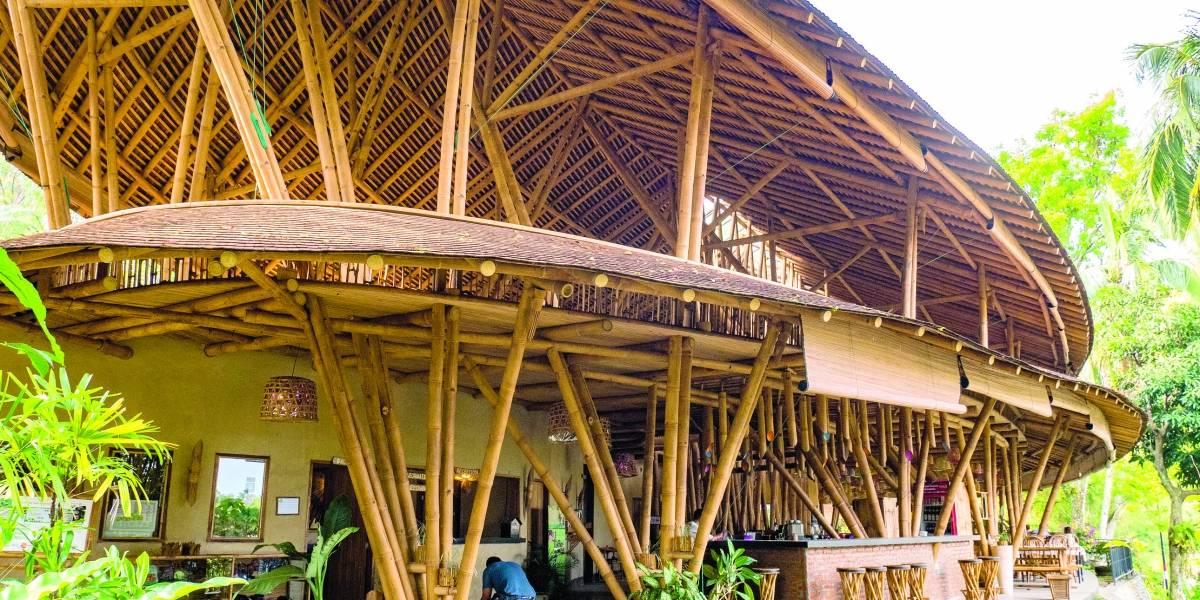 El bambú se instala en los hogares  como sustituto de la madera