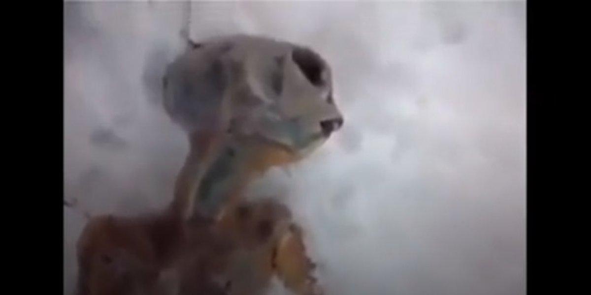 Vídeo de suposto extraterrestre achado na Rússia intriga as redes sociais