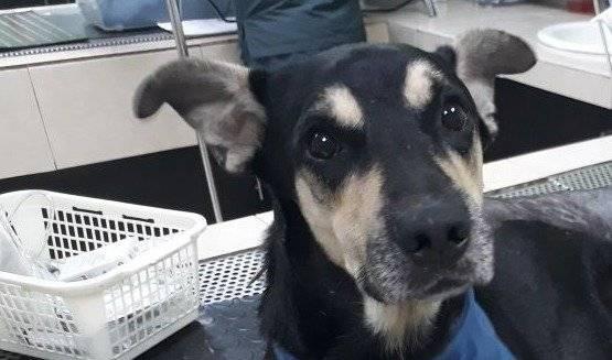 Coloso tuvo un lindo gesto con Brauny, el perrito que cayó del estadio Capwell Rescate Animal ONG