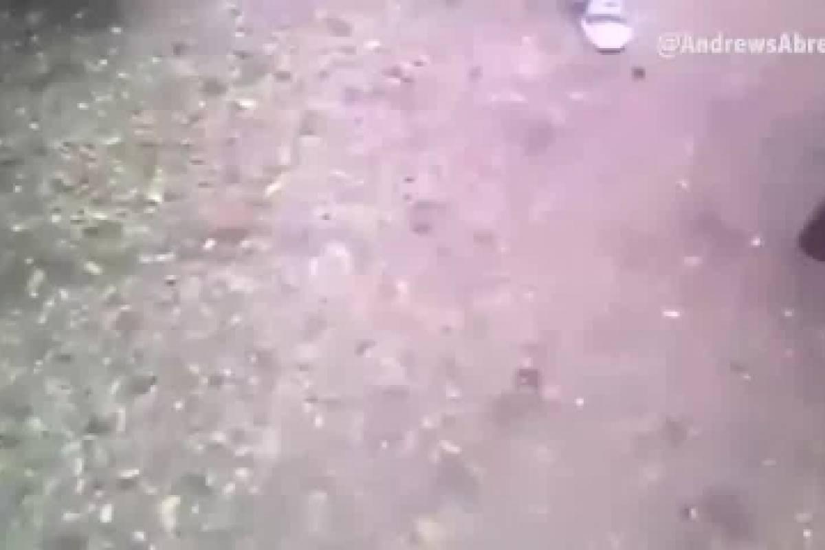 Venezolano descuartiza a su perro para poder comer algo