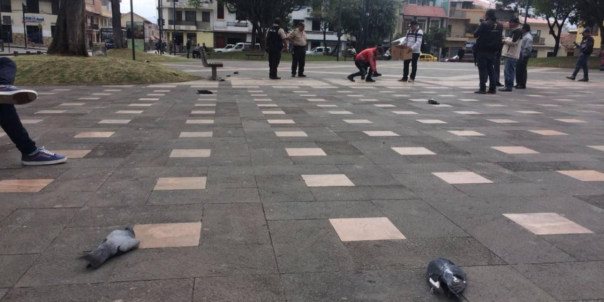 Palomas fueron envenenadas en Cuenca