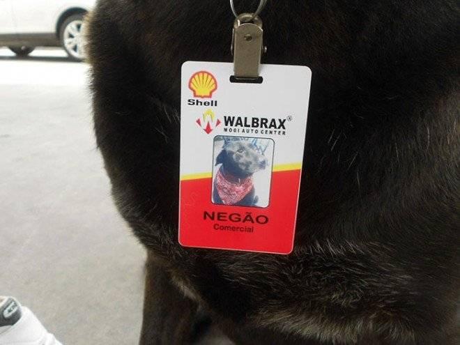 abandoneddoggasstationemployeenegaobrazil2660x550.jpg