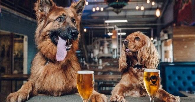 brewdogpuppyparentalleaveprogramme660x550.jpg
