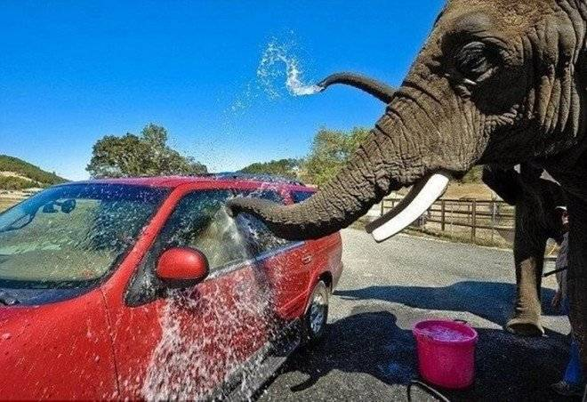 elefantessonforzadoslavarautosparalosturistasenuncruelzoologicovideo3660x550.jpg