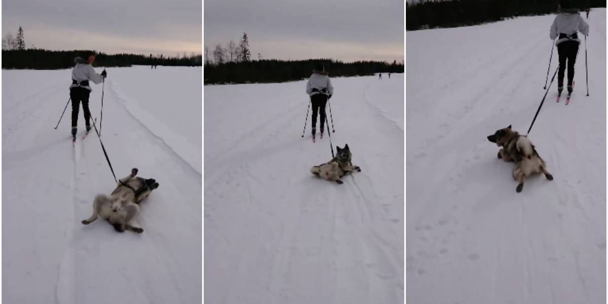 ¡No quiero caminar! Perrito sale a pasear con su dueña en medio de la nieve y le baja toda la flojera