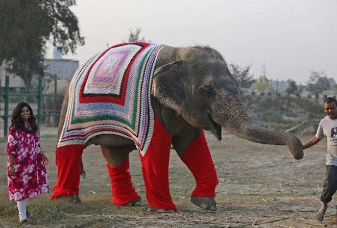 wildlifesoselepantsweaters1660x550.jpg