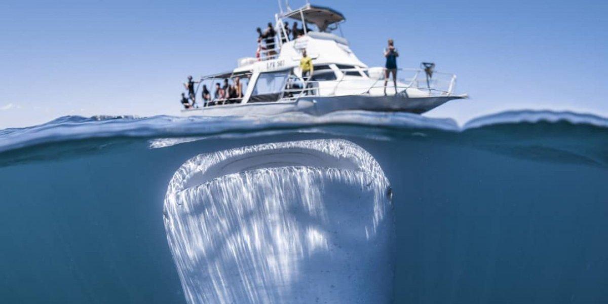 La foto más impactante del año: pequeño barco de turistas se encontró de frente al tiburón más gigantesco del planeta
