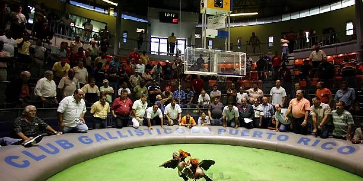 Peleas de gallos: una práctica atada a la realidad sociológica del país