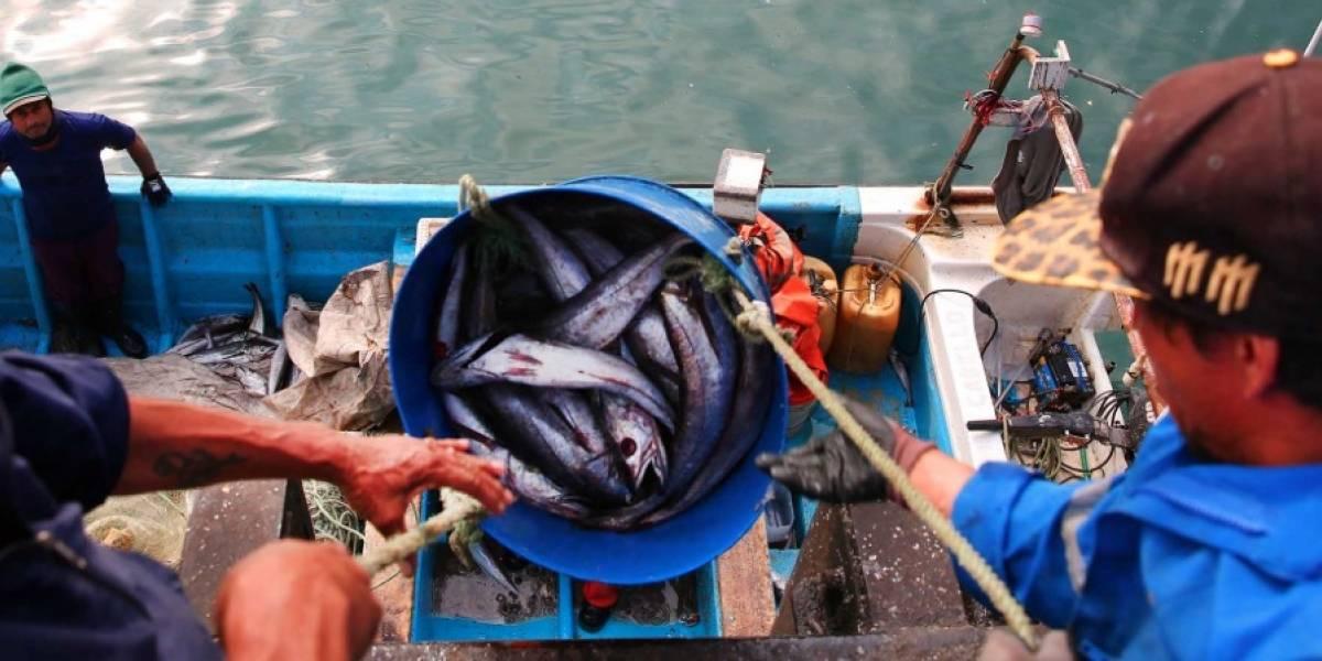 Productos del mar chilenos atacan con fuerza al mercado de los Estados Unidos
