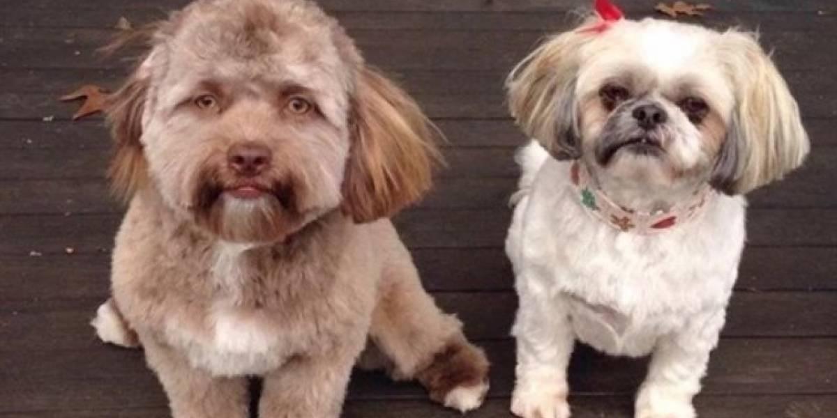 Bob, el perro con cara de humano que ha perturbado a Internet