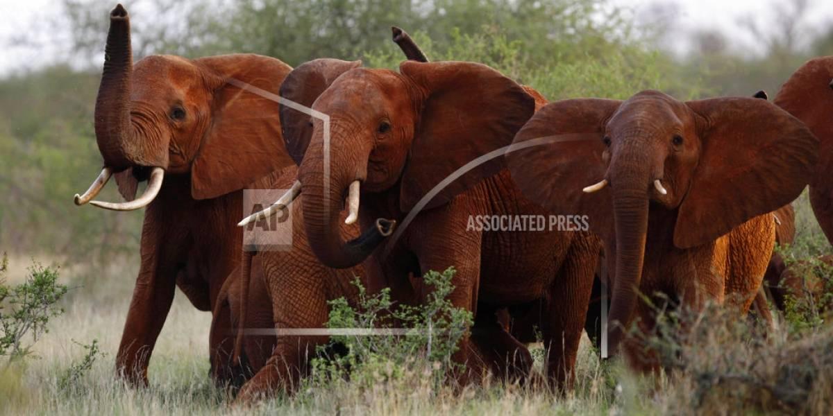 Trump mantiene opinión sobre la cacería de elefantes