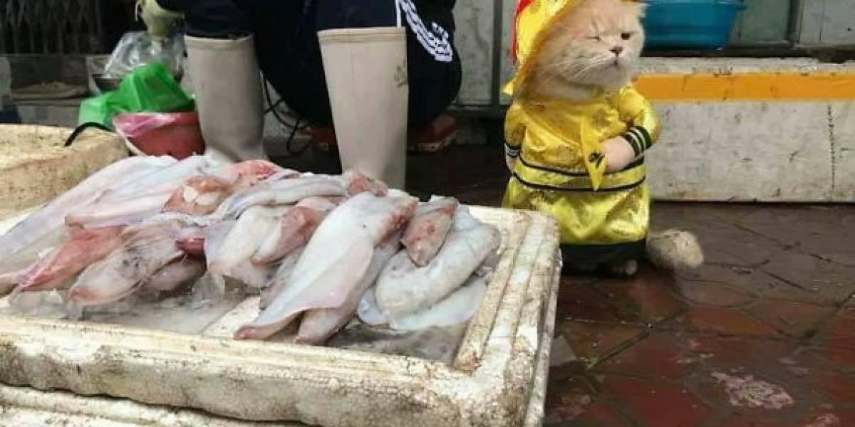 La historia detrás del adorable gato que vende pescado en Vietnam