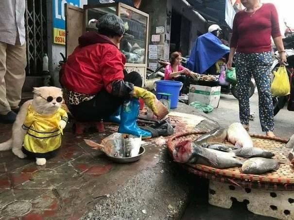 El gato más famoso el mundo, 'vende' pescado en Vietnam