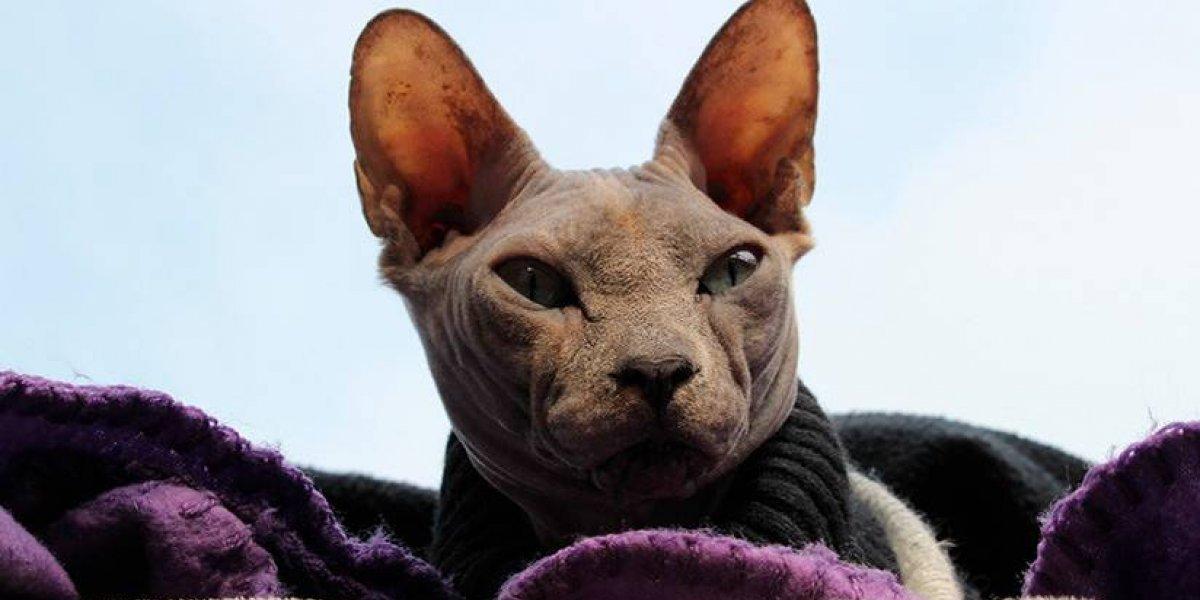 Misterioso gato revoluciona las redes