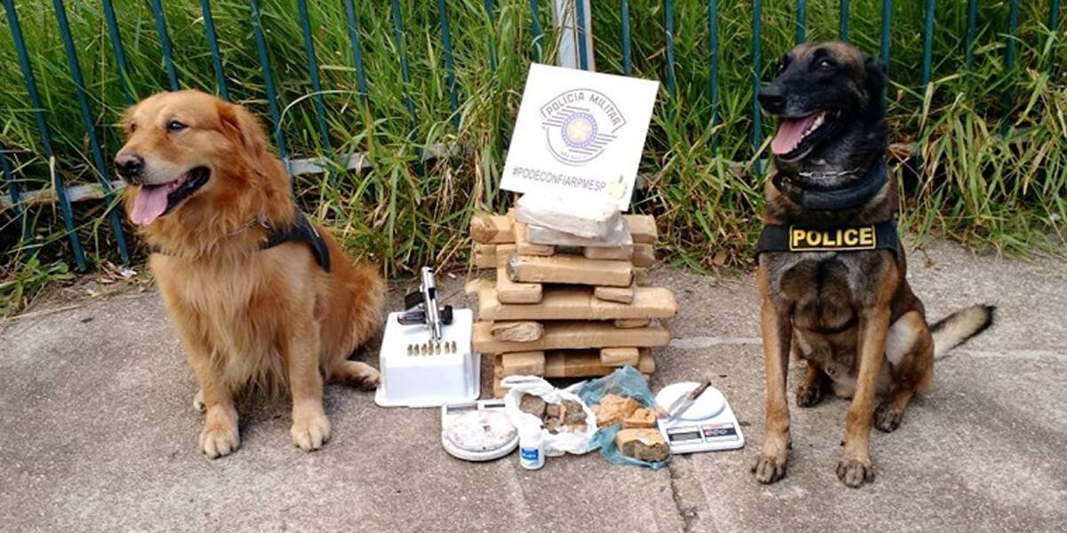 Cães encontram 20 porções de drogas enterradas em quintal em Sorocaba