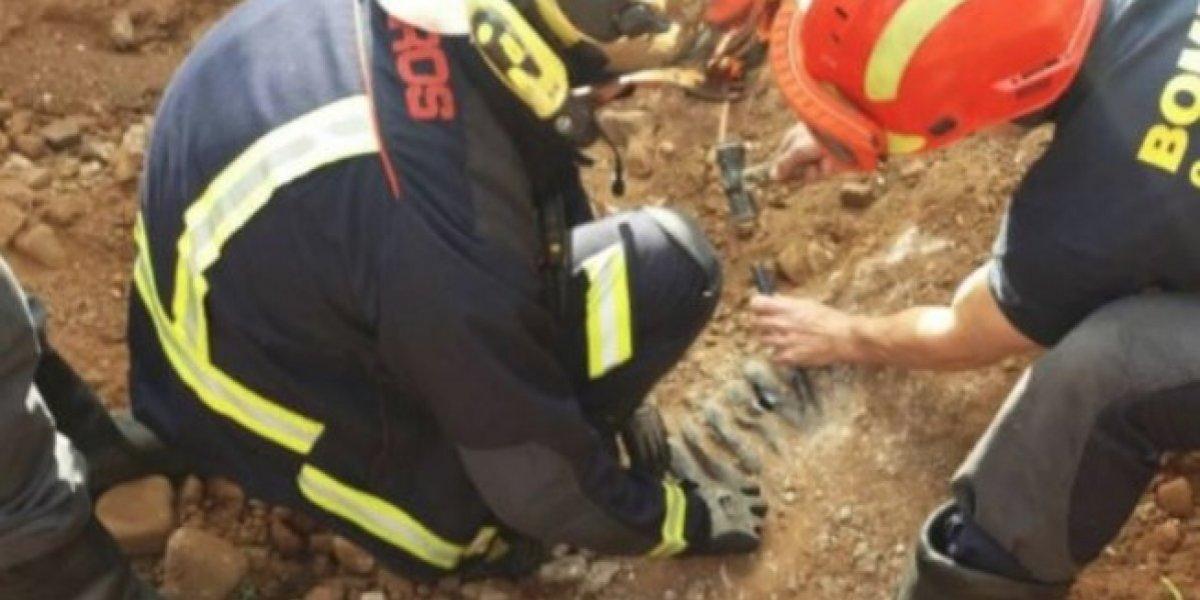 Bomberos portugueses rescataron un perro enterrado bajo tierra