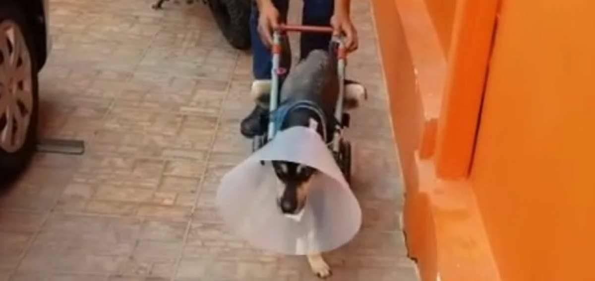 Brauny recibió una silla de ruedas y sigue recuperándose